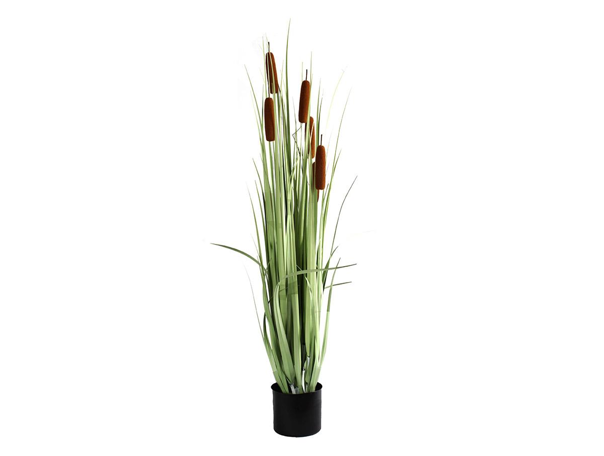 Tráva Cattail Stack 120 cm-II dekoratívna tráva