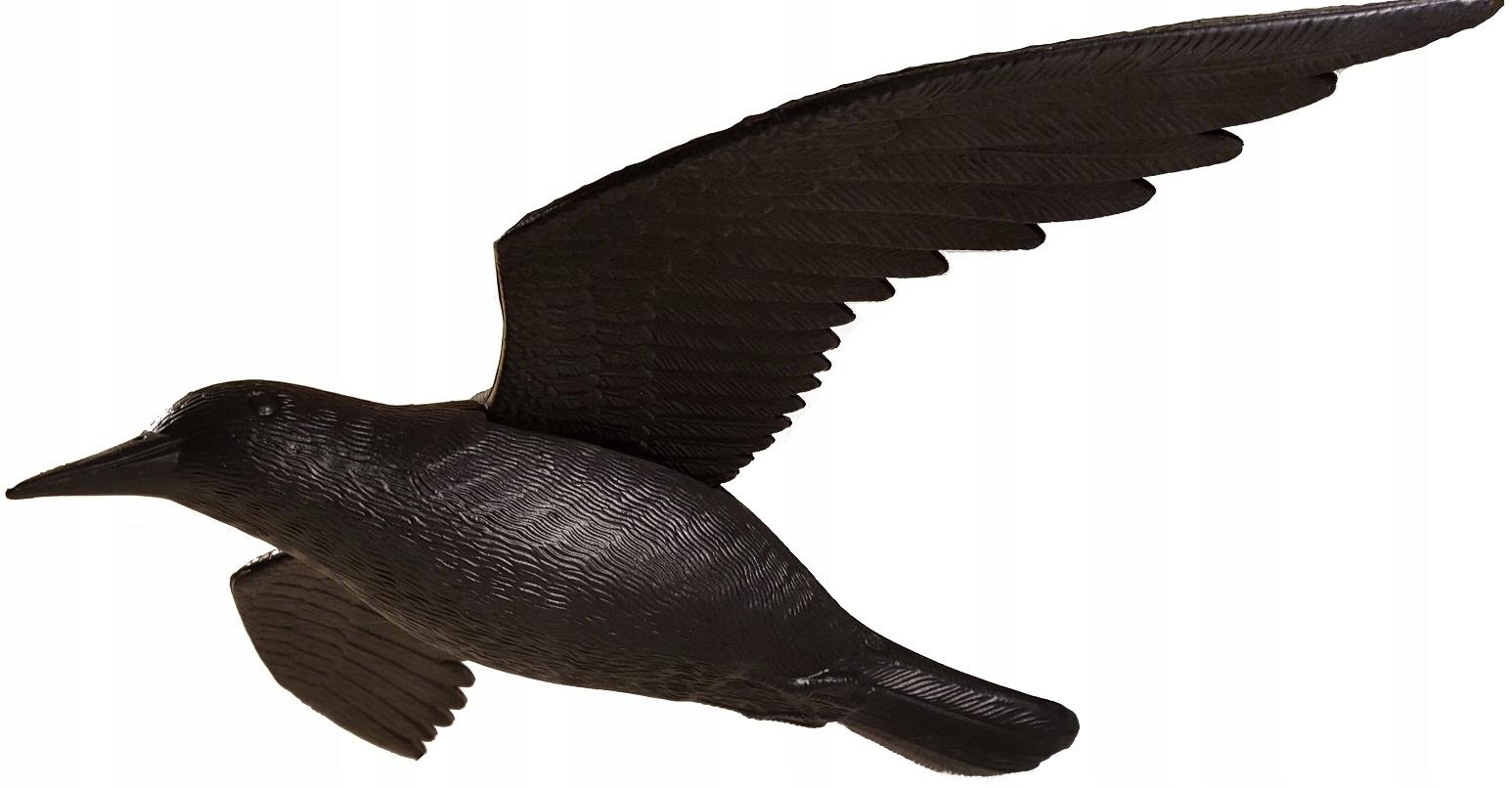 Duży kruk w locie odstraszacz ptaków gryzoni 60cm