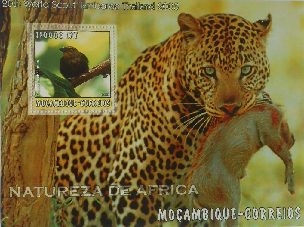 Купить FAUNA AFRYKAŃSKA Wikłacz ptaki Mozambik #MOZ2261 на Otpravka - цены и фото - доставка из Польши и стран Европы в Украину.