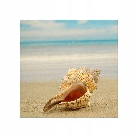 Muszla na plaży - plakat premium