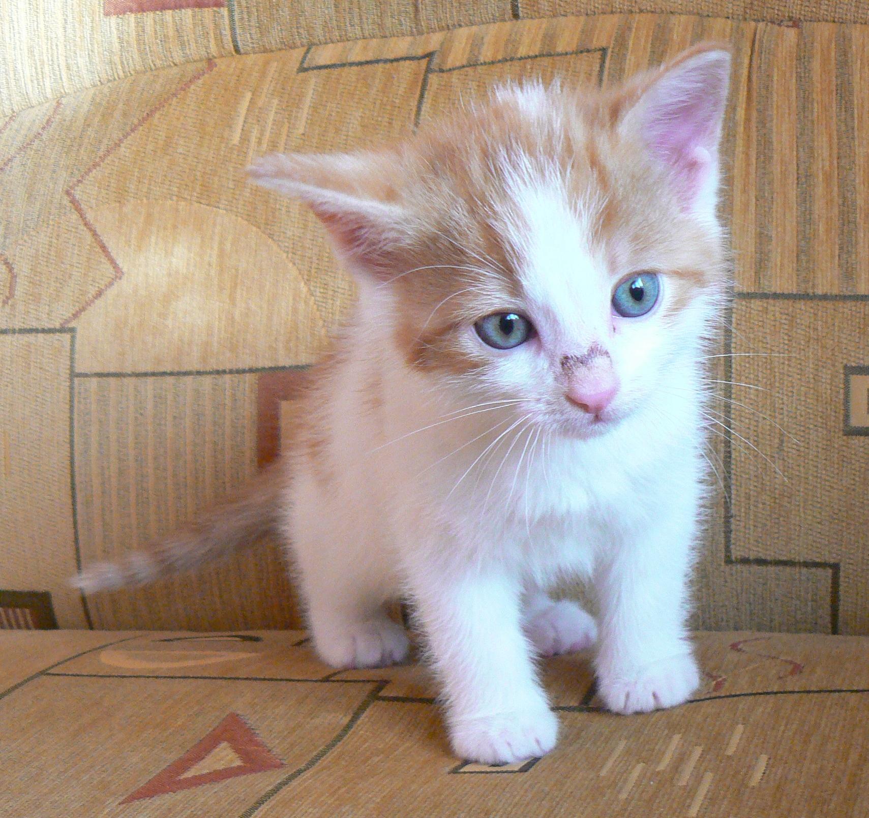 Niewiarygodnie przygarnij kotka! oddam w dobre ręce 4 małe kotki - 7651503429 UK42