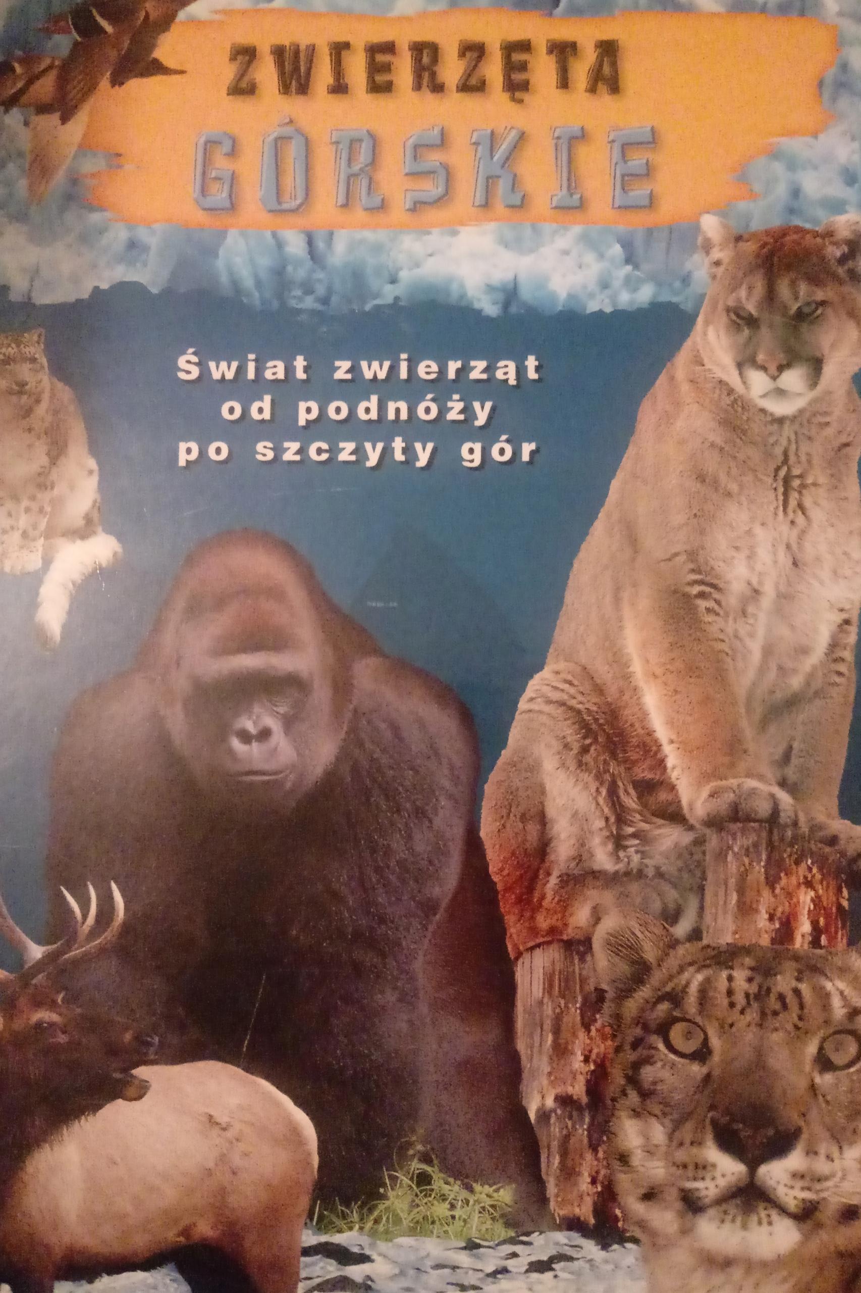 dbae47e449930d Zwierzęta górskie - Świat zwierząt - 7706726425 - oficjalne archiwum ...