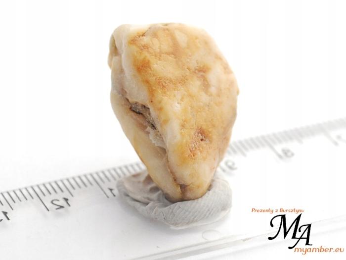 15219 Bursztyn Bałtycki bryłka 4.7 g + Cert