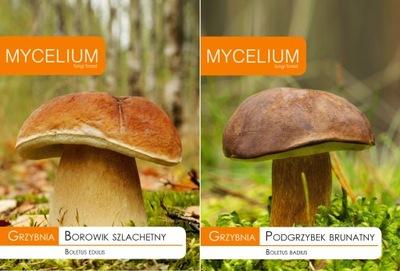 Мицелий белый Гриб + бурый польский гриб
