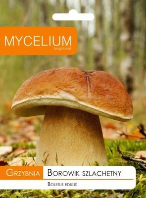 МИЦЕЛИЙ белый ГРИБ, белый гриб Грибы