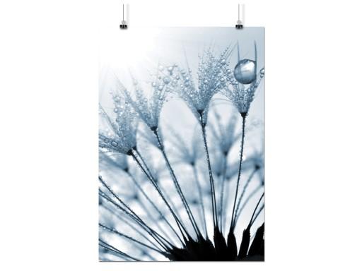 Plakat Dmuchawce Kwiaty 50x70 Cm 12 Wzorów Matowy