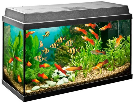AKWARIUM 30L 40x25x30cm POKRYWA LED+13 gratisów